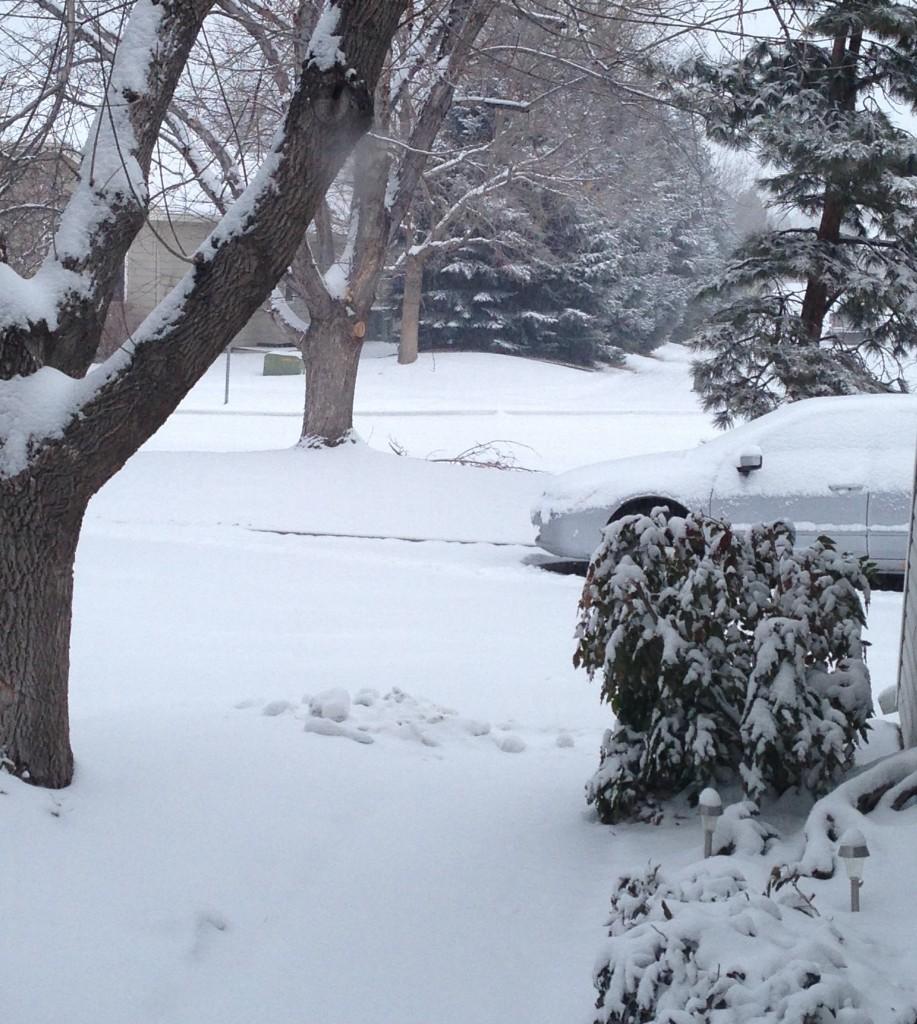 Feb 21 Snow