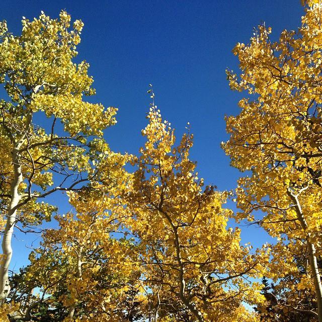 Brainard Lake Recreation Area Fall Color