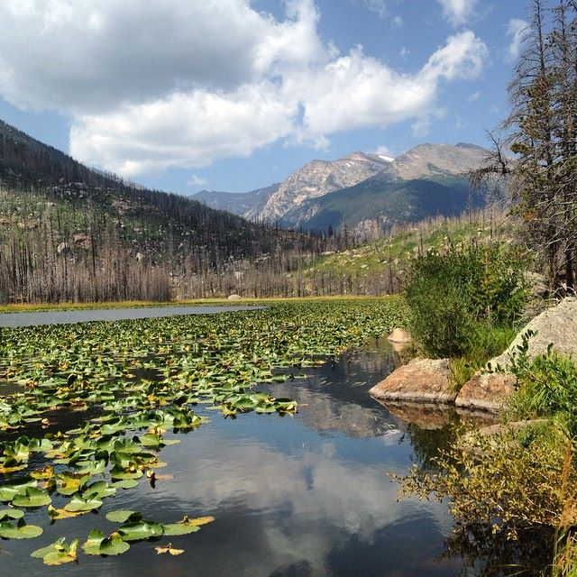 Cub Lake at Rocky Mountain National Park